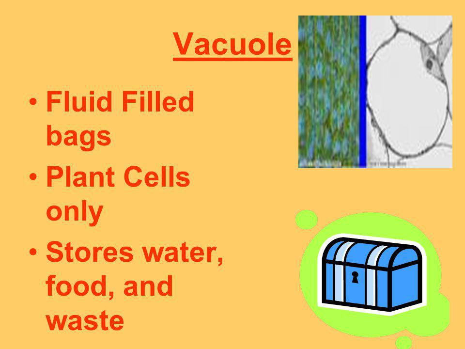 Vacuole Fluid Filled bags Plant Cells only