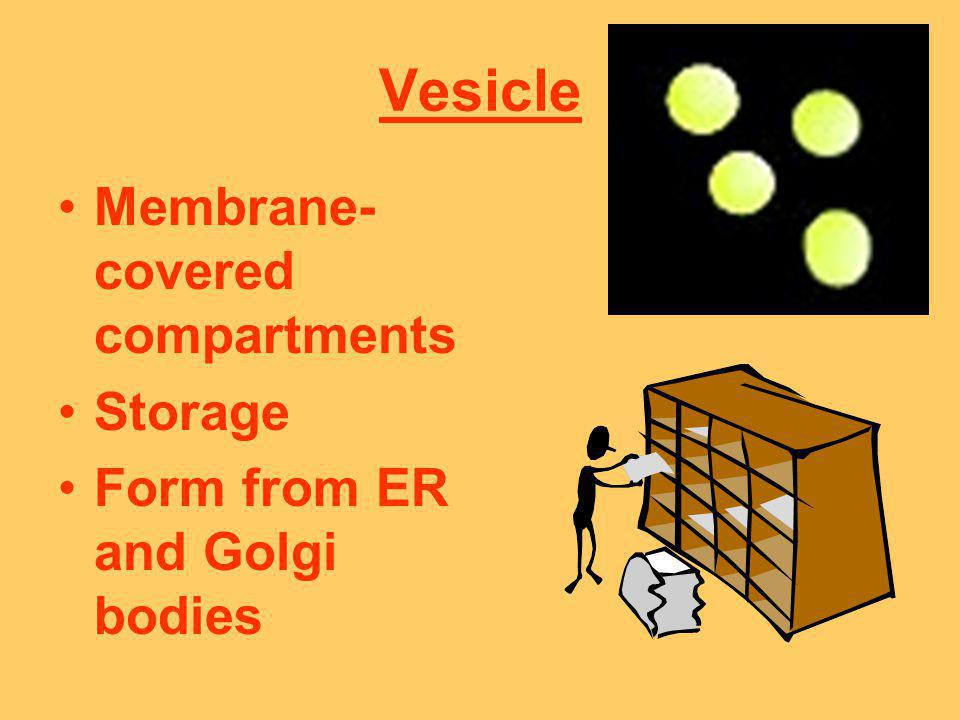 Vesicle Membrane-covered compartments Storage