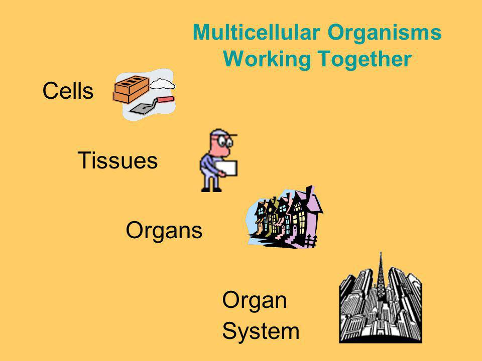 Multicellular Organisms Working Together