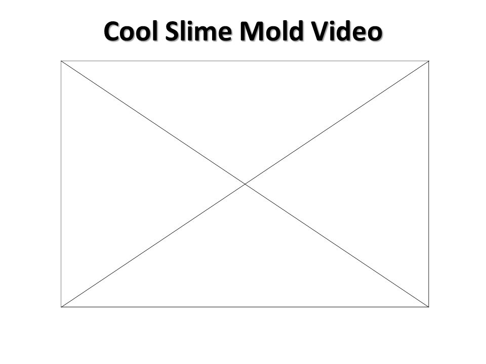Cool Slime Mold Video