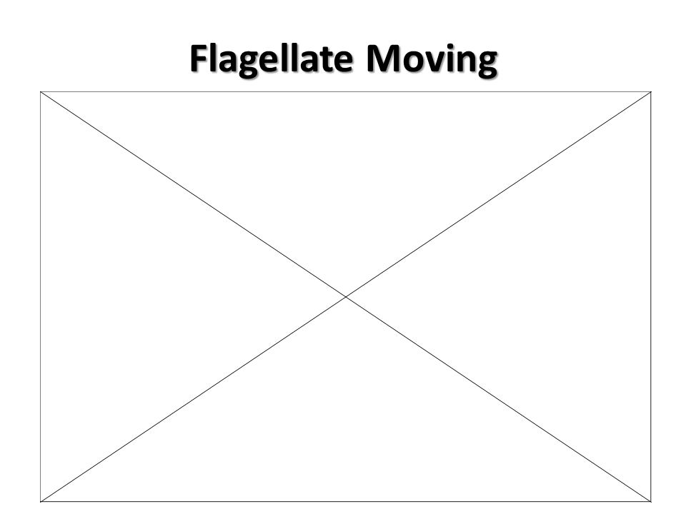 Flagellate Moving