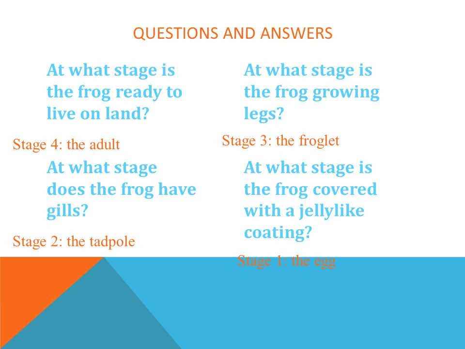 Questions and Answers At what stage is the frog ready to live on land At what stage does the frog have gills