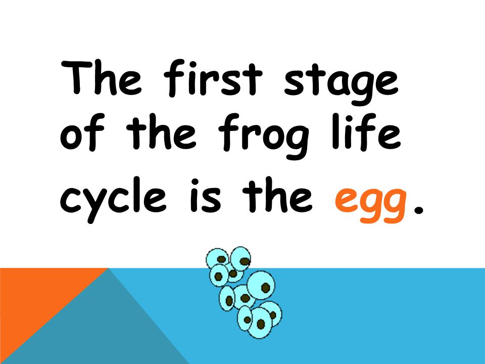 The first stage of the frog life cycle is the egg.