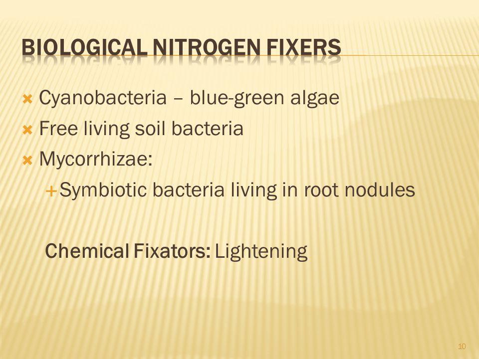 Biological Nitrogen Fixers