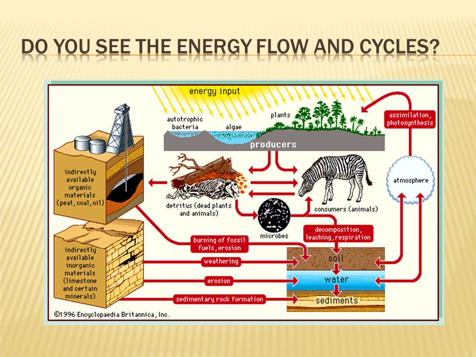 Do you see the energy flow and cycles