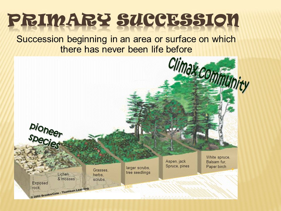 Primary Succession Succession beginning in an area or surface on which there has never been life before.