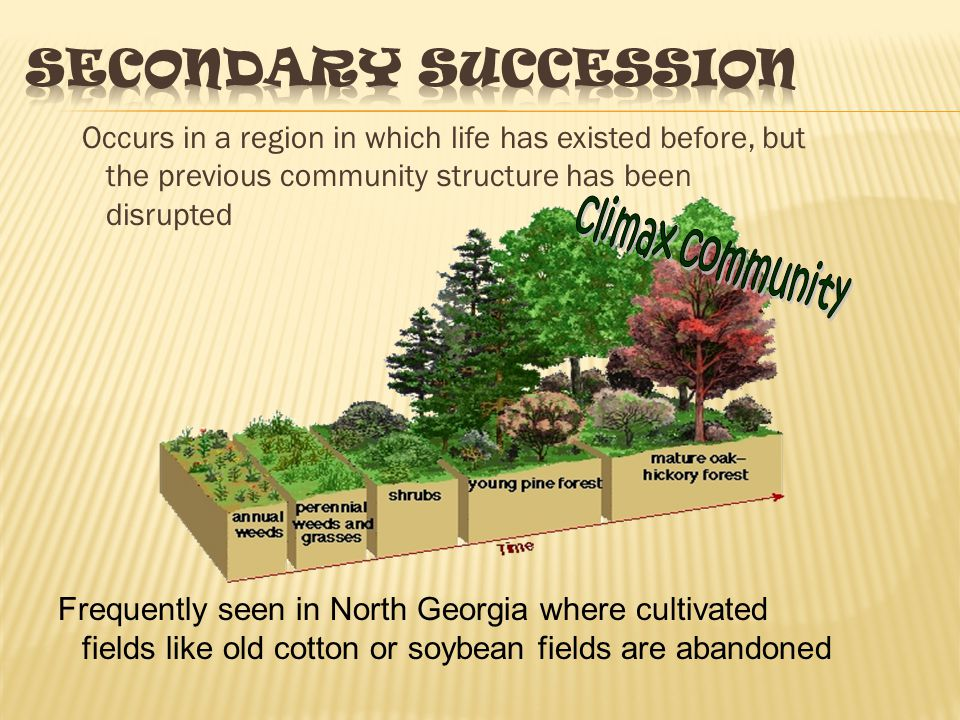 Secondary Succession Occurs in a region in which life has existed before, but the previous community structure has been disrupted.