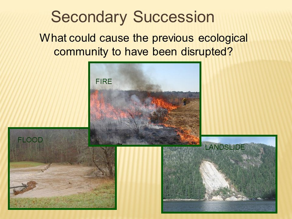 Secondary Succession What could cause the previous ecological community to have been disrupted FIRE.