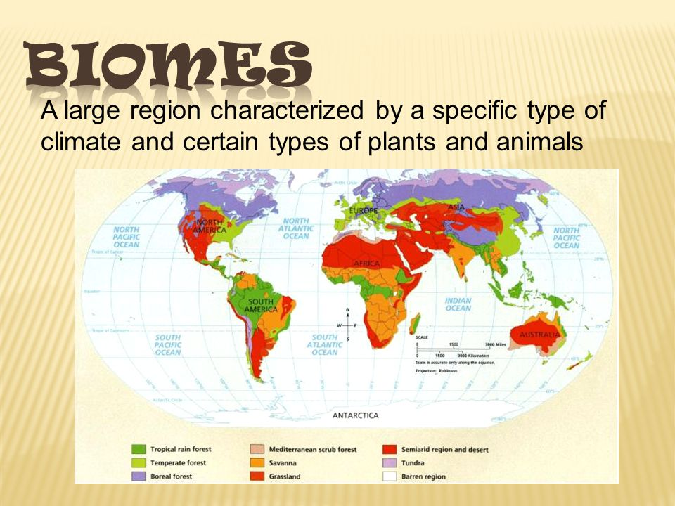 Biomes A large region characterized by a specific type of climate and certain types of plants and animals.
