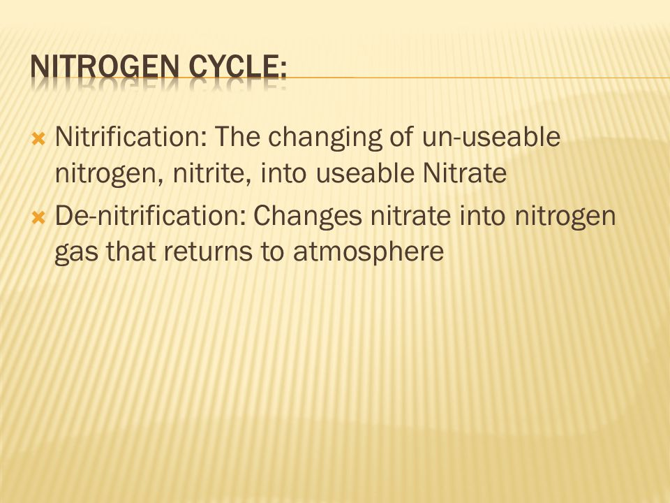Nitrogen Cycle: Nitrification: The changing of un-useable nitrogen, nitrite, into useable Nitrate.