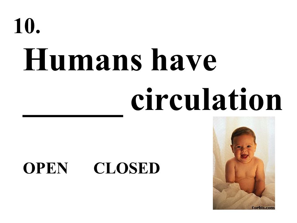 Humans have ______ circulation OPEN CLOSED