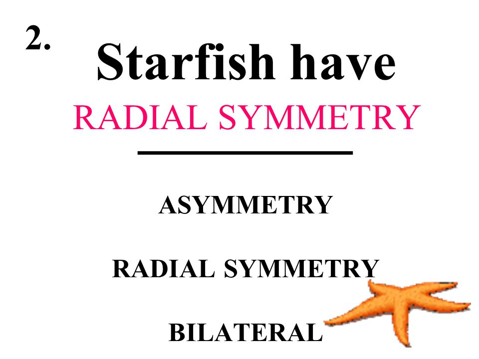 Starfish have ________ ASYMMETRY RADIAL SYMMETRY BILATERAL
