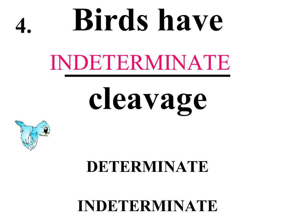 Birds have __________ cleavage DETERMINATE INDETERMINATE