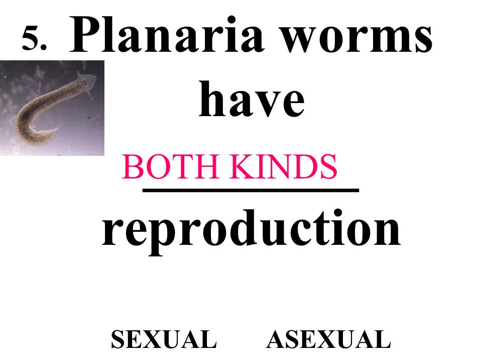 Planaria worms have ________ reproduction SEXUAL ASEXUAL