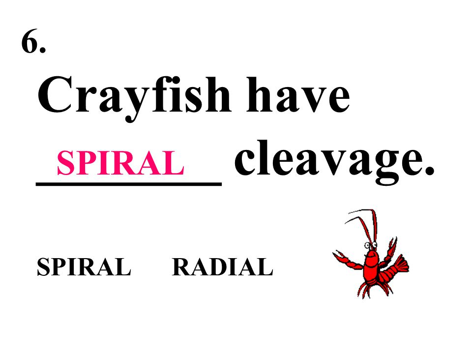 Crayfish have _______ cleavage. SPIRAL RADIAL
