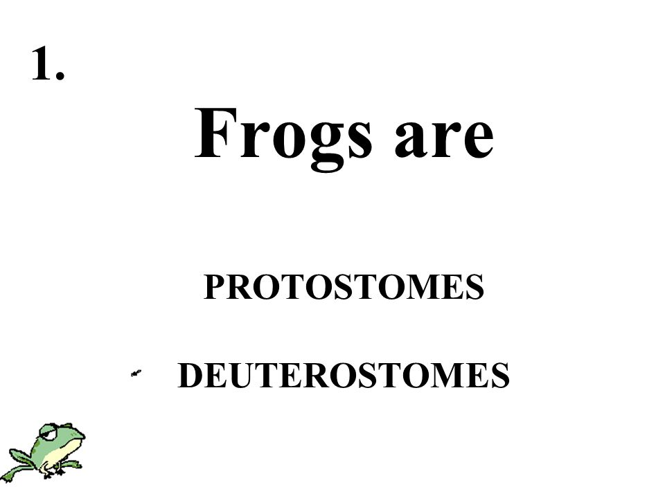 Frogs are PROTOSTOMES DEUTEROSTOMES