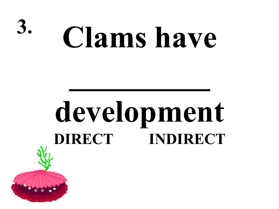 Clams have _________ development DIRECT INDIRECT