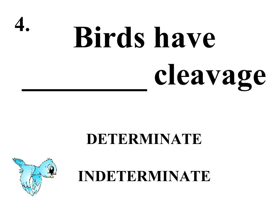 Birds have ________ cleavage DETERMINATE INDETERMINATE