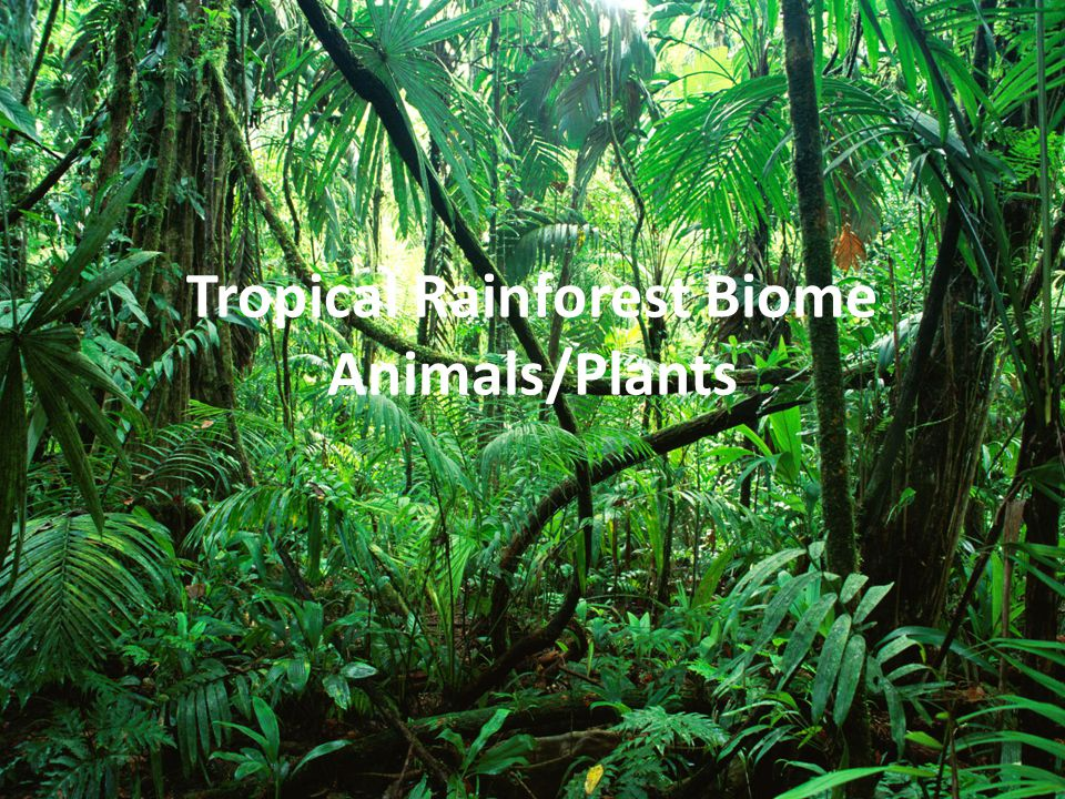 Tropical Rainforest Biome Animals/Plants