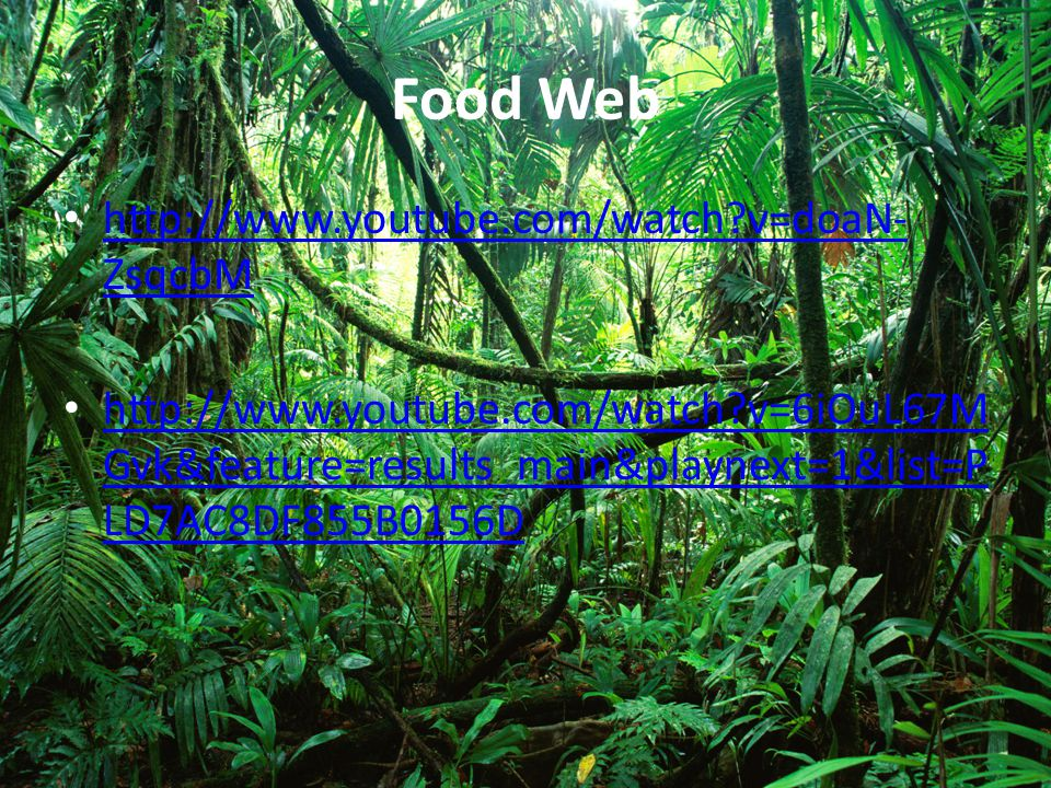 Food Web http://www.youtube.com/watch v=doaN-ZsqcbM