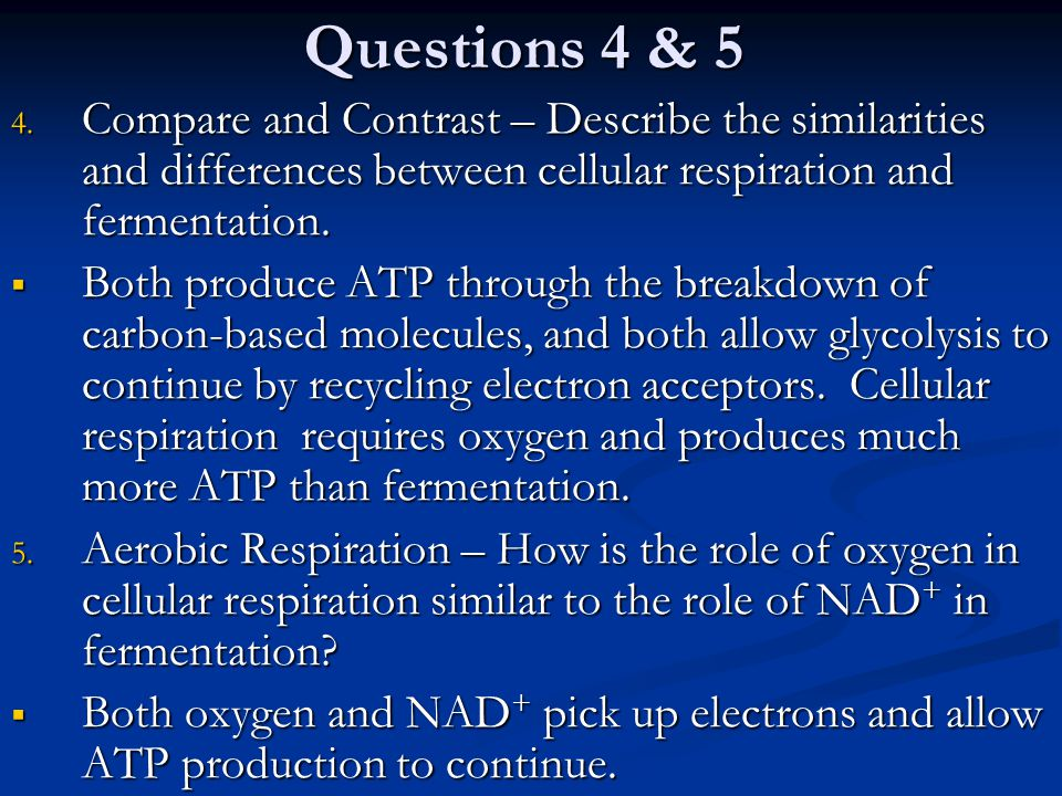 Questions 4 & 5 Compare and Contrast – Describe the similarities and differences between cellular respiration and fermentation.