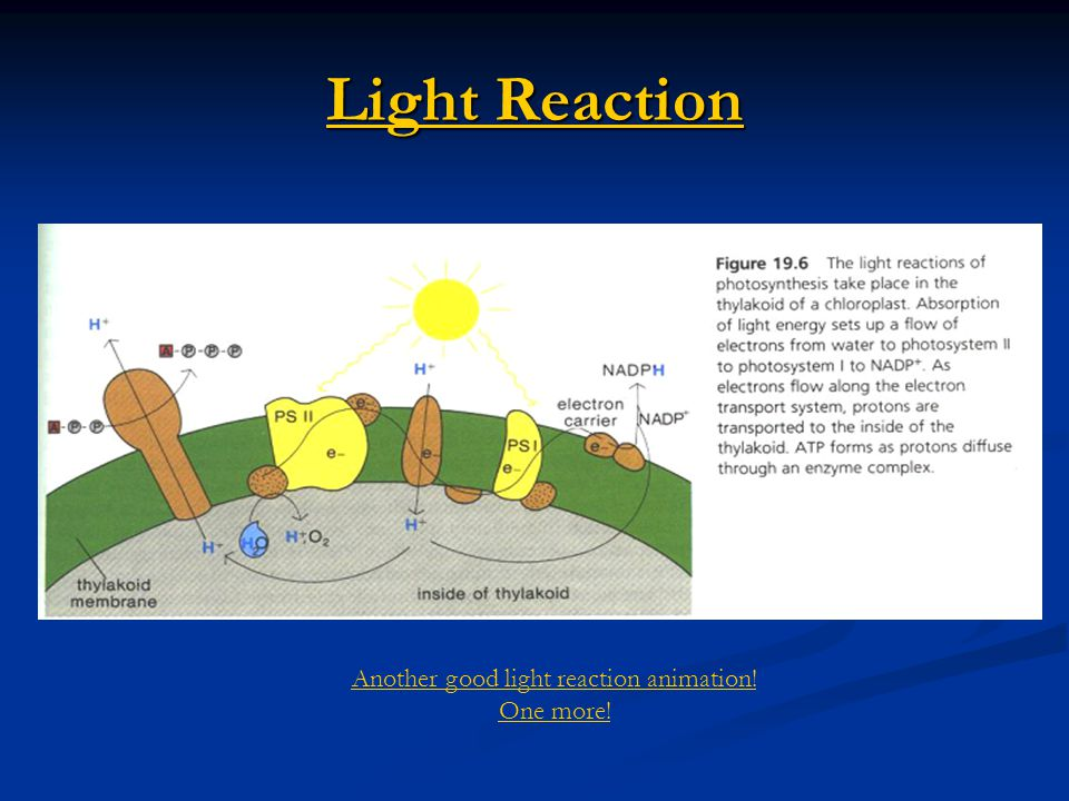 Another good light reaction animation!