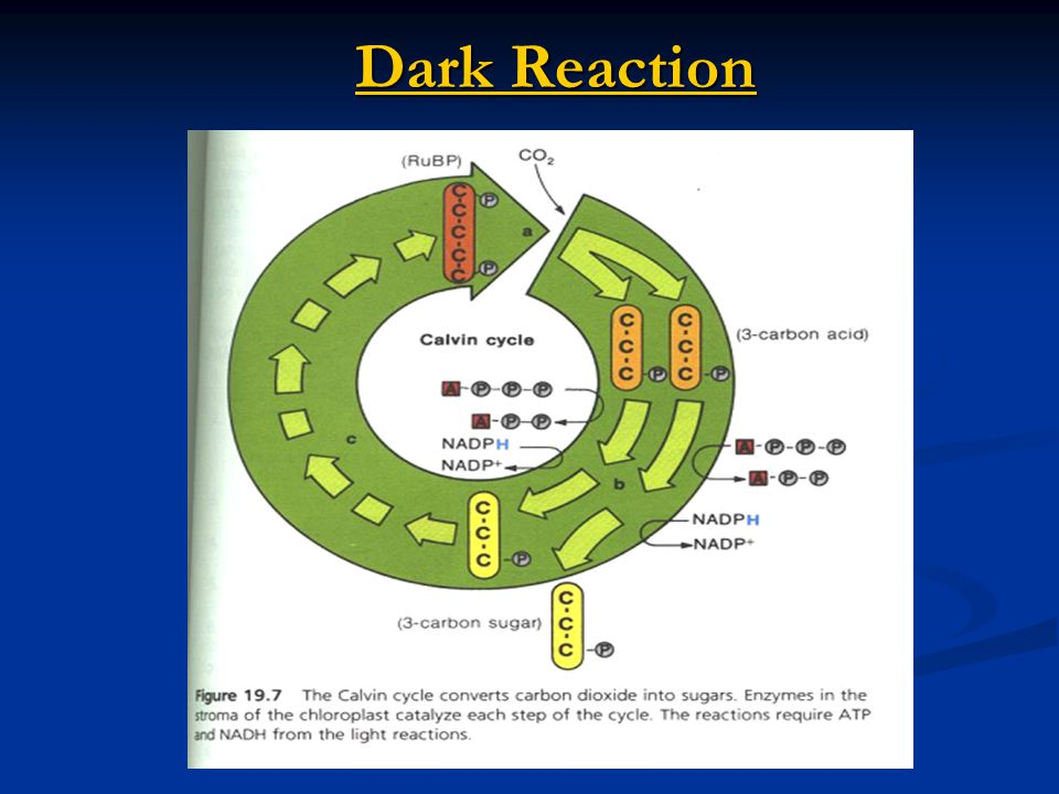 Dark Reaction
