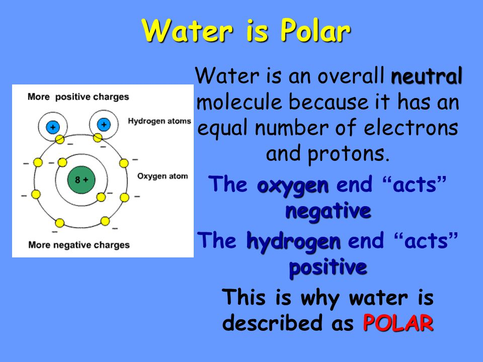 Water is Polar Water is an overall neutral molecule because it has an equal number of electrons and protons.