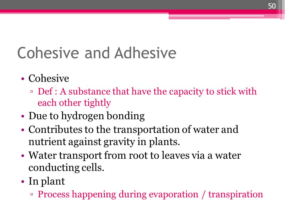 Cohesive and Adhesive Cohesive Due to hydrogen bonding