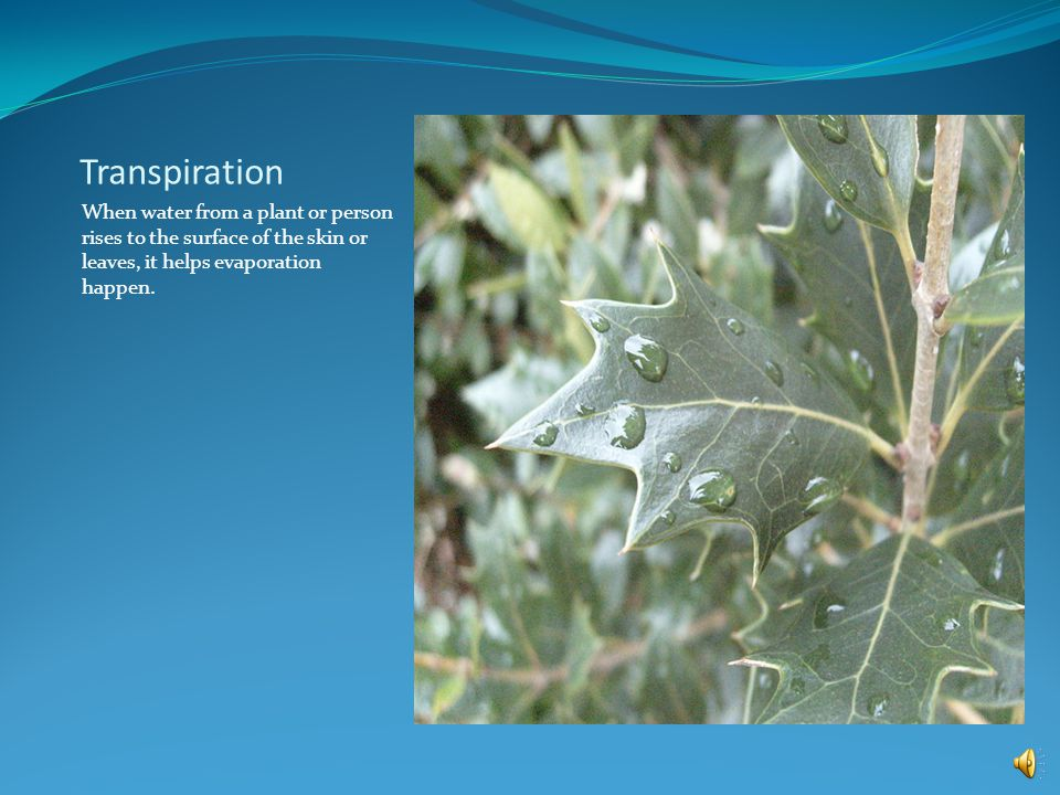Transpiration When water from a plant or person rises to the surface of the skin or leaves, it helps evaporation happen.
