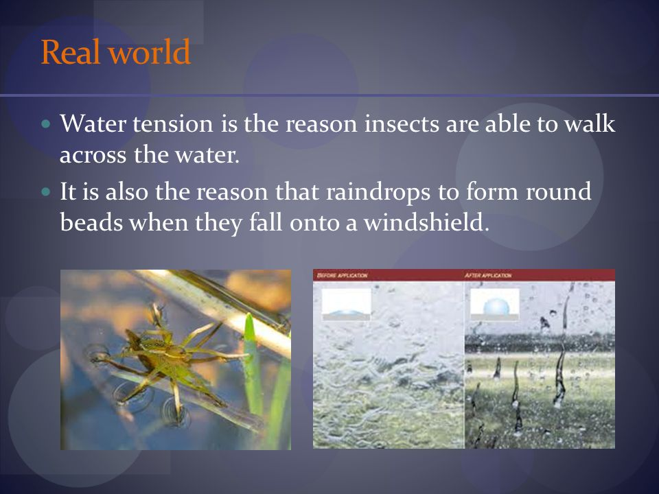 Real world Water tension is the reason insects are able to walk across the water.