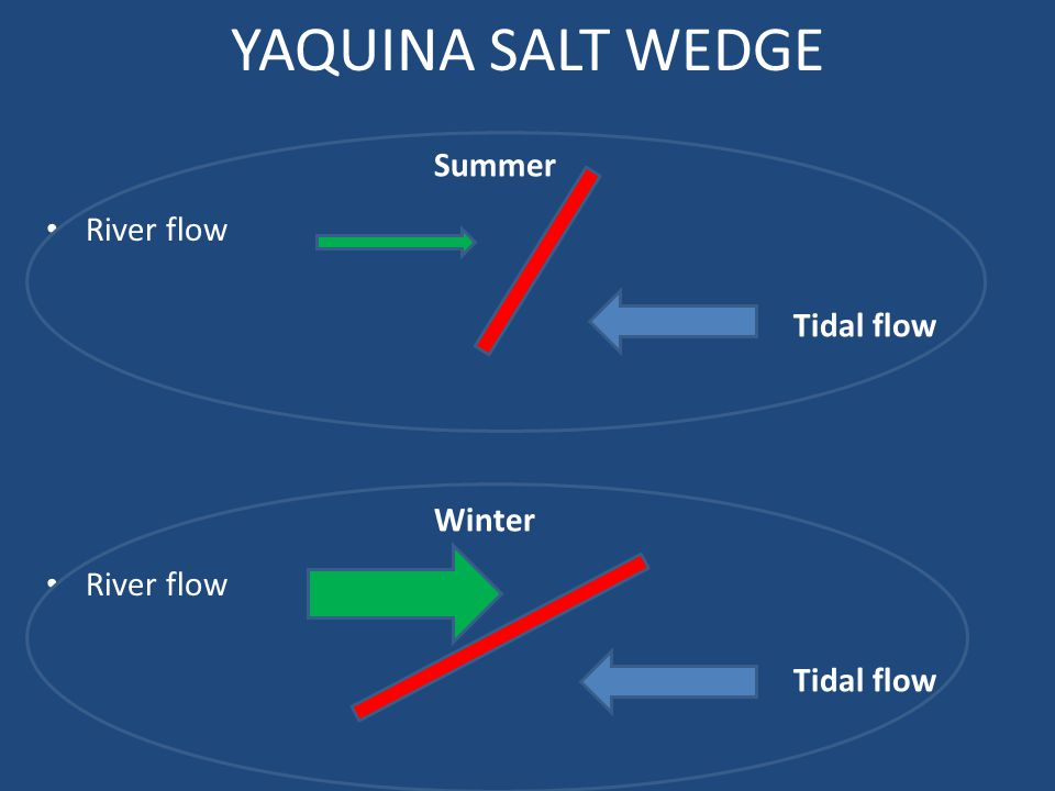YAQUINA SALT WEDGE Summer Winter River flow Tidal flow