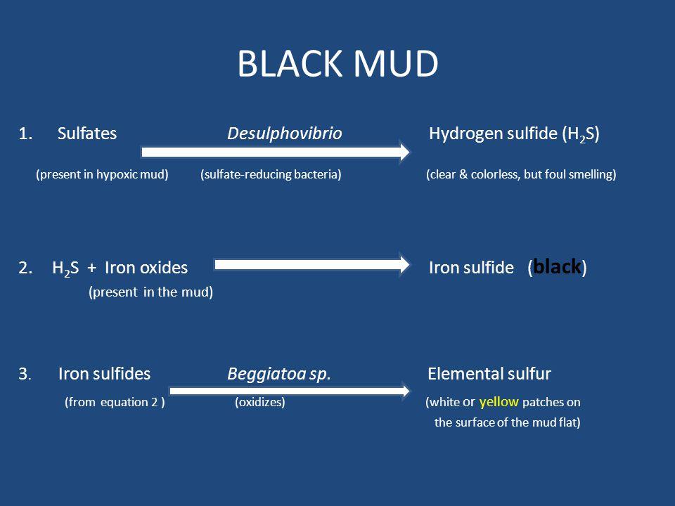 BLACK MUD 1. Sulfates Desulphovibrio Hydrogen sulfide (H2S)
