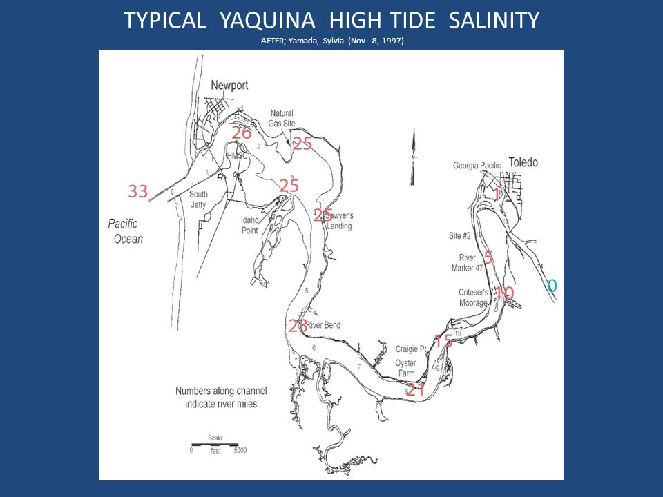 TYPICAL YAQUINA HIGH TIDE SALINITY AFTER; Yamada, Sylvia (Nov. 8, 1997)