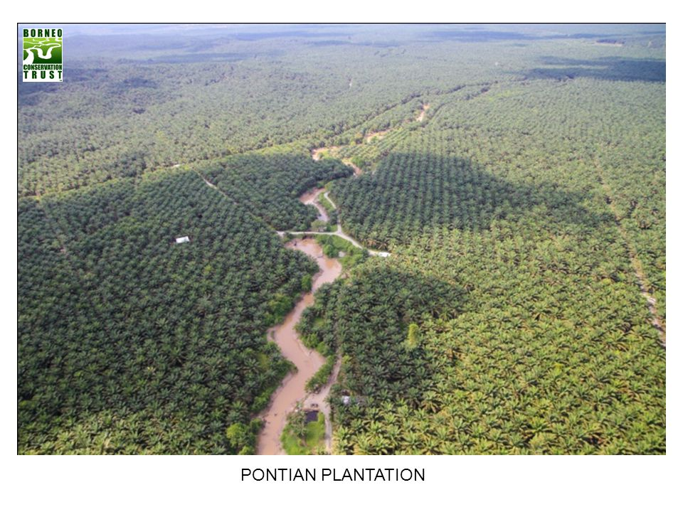 PONTIAN PLANTATION