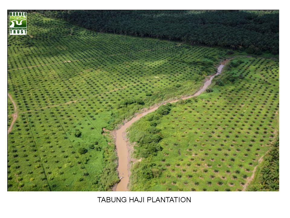 TABUNG HAJI PLANTATION