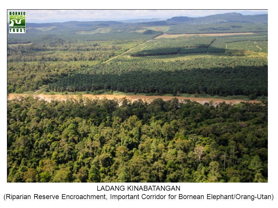 LADANG KINABATANGAN (Riparian Reserve Encroachment, Important Corridor for Bornean Elephant/Orang-Utan)