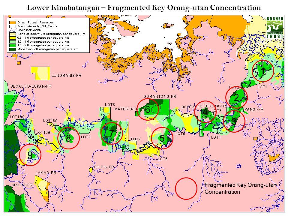 Lower Kinabatangan – Fragmented Key Orang-utan Concentration