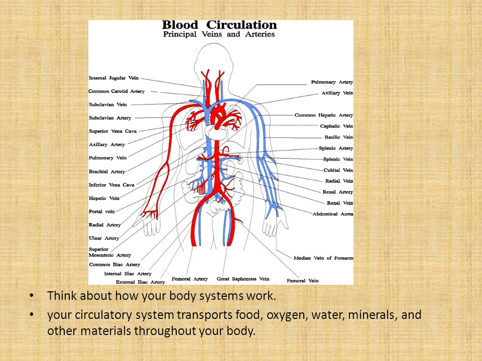Think about how your body systems work.