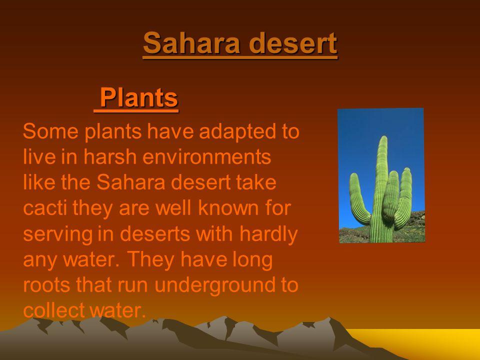 Sahara desert Plants.