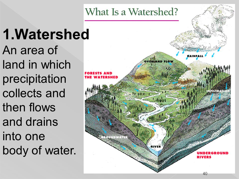 Watershed An area of land in which precipitation collects and