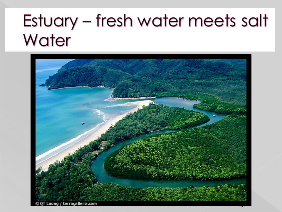 Estuary – fresh water meets salt Water