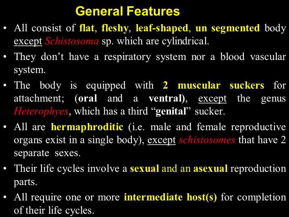 General Features All consist of flat, fleshy, leaf-shaped, un segmented body except Schistosoma sp. which are cylindrical.