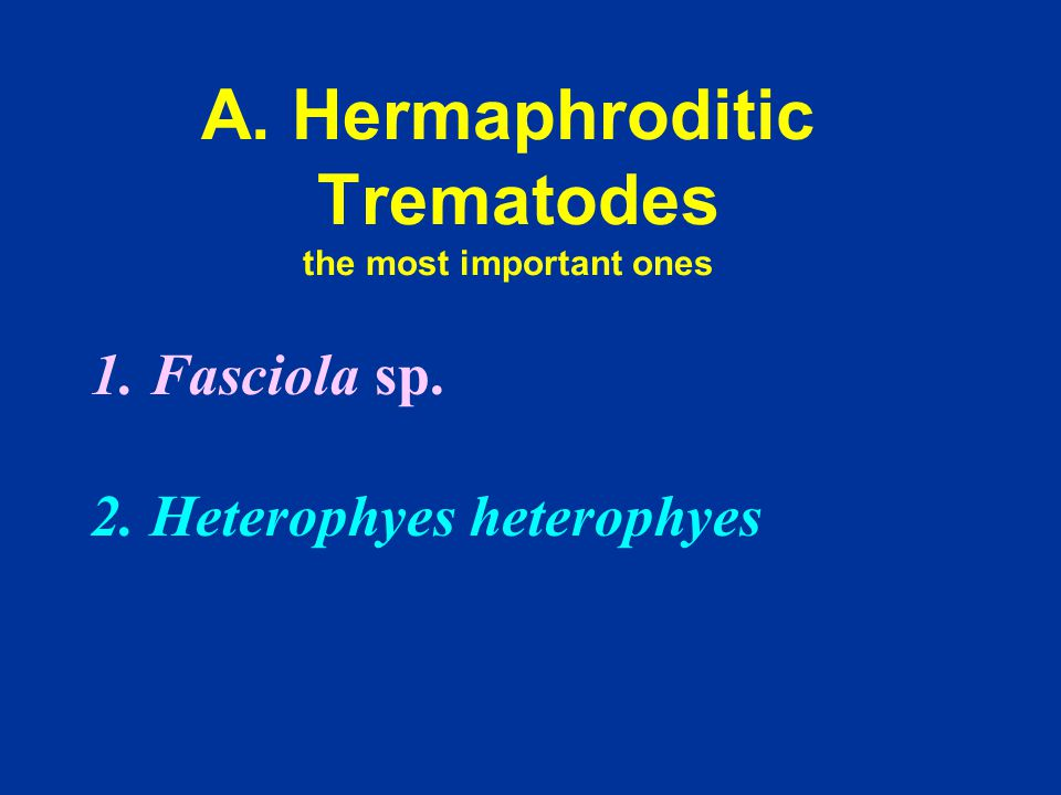 A. Hermaphroditic Trematodes the most important ones