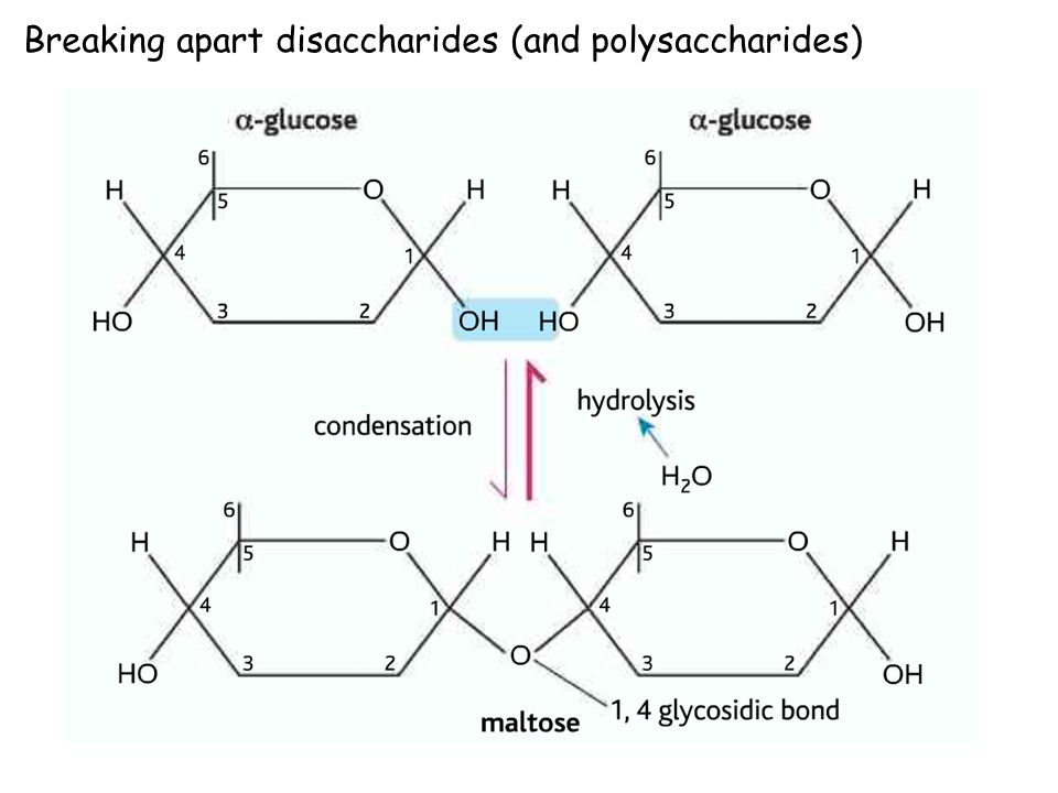 Breaking apart disaccharides (and polysaccharides)