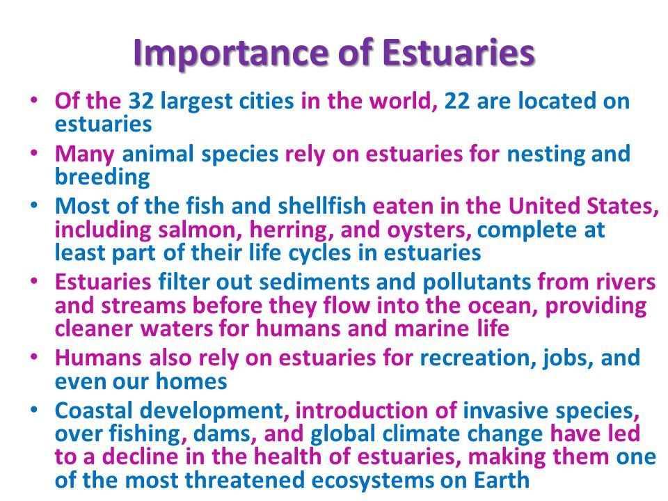 the importance of estuaries in the ecosystem Estuaries are important natural places º ecosystem services classifying estuaries º geology º water circulation estuarine habitats adaptations to life in the estuary disturbances to estuaries º natural º human monitoring estuaries the future.