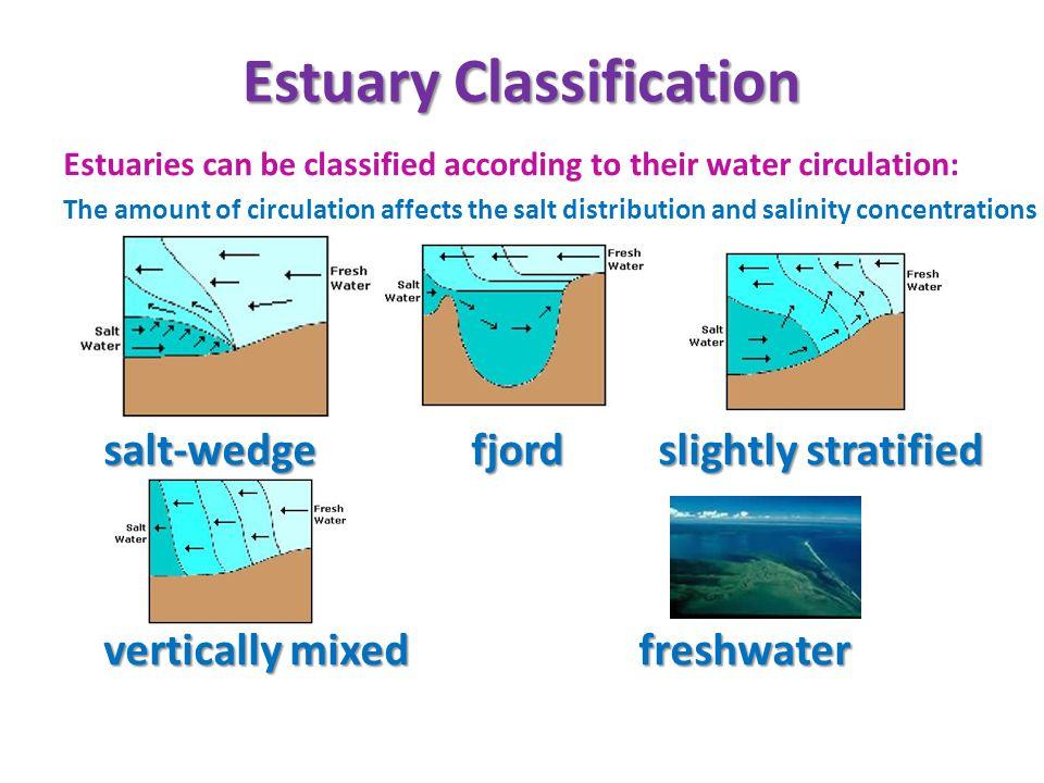 Estuary Classification