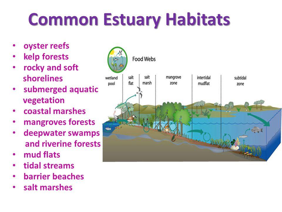 Common Estuary Habitats