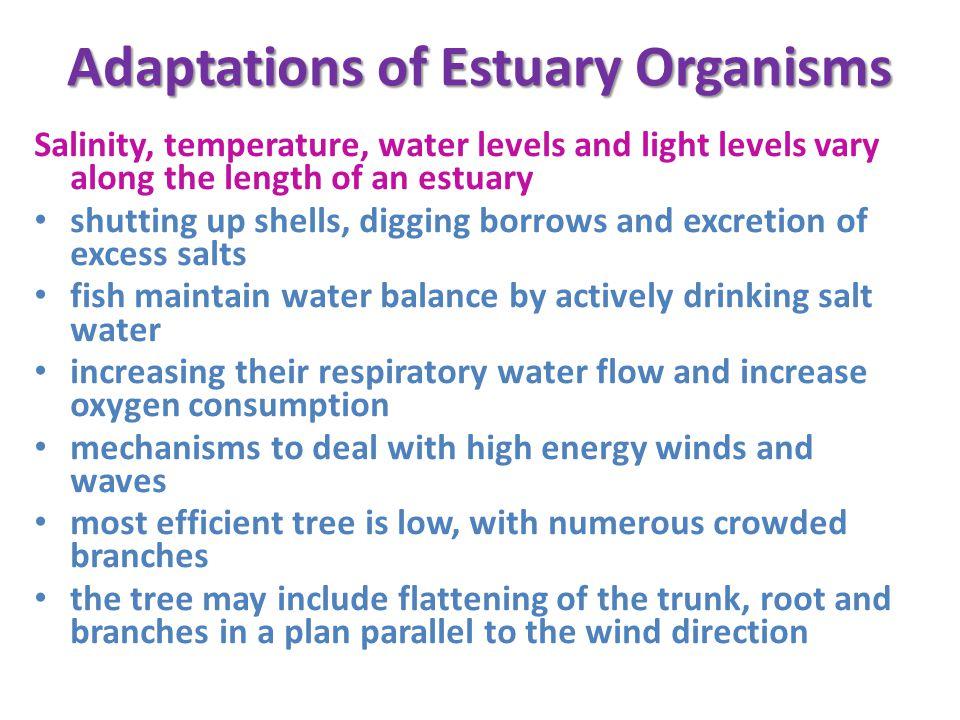 Adaptations of Estuary Organisms