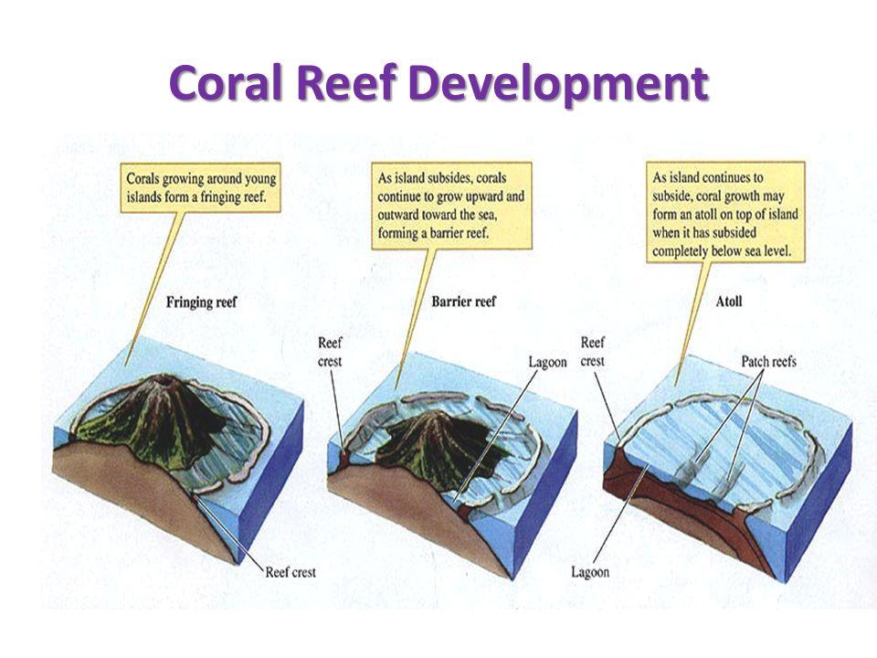 Coral Reef Development
